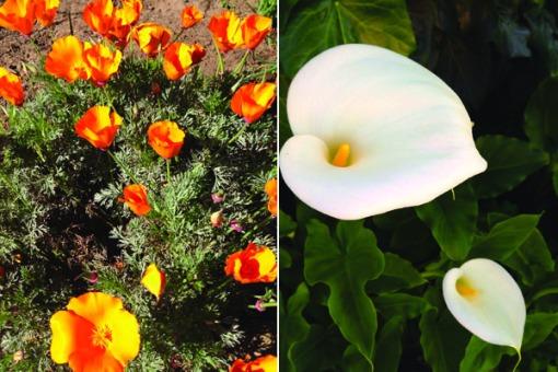 flowerf1