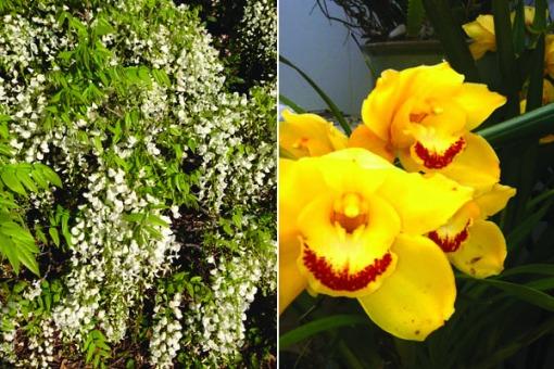 flowerf3