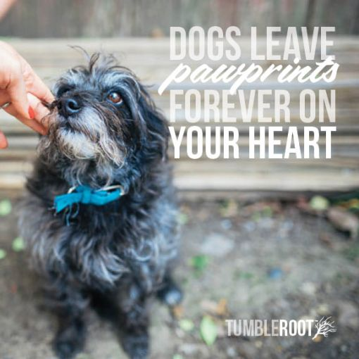 quotes_dogspawprints