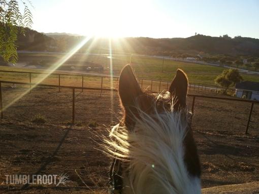 horseblog1.jpg